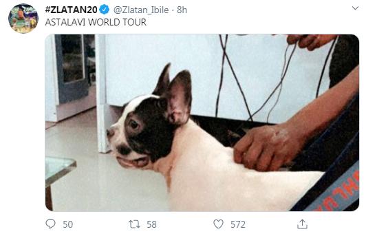 "Zlatan's Dog, ""Astalavi"" Gets International Passport, See What Zlatan Has To Say!!"